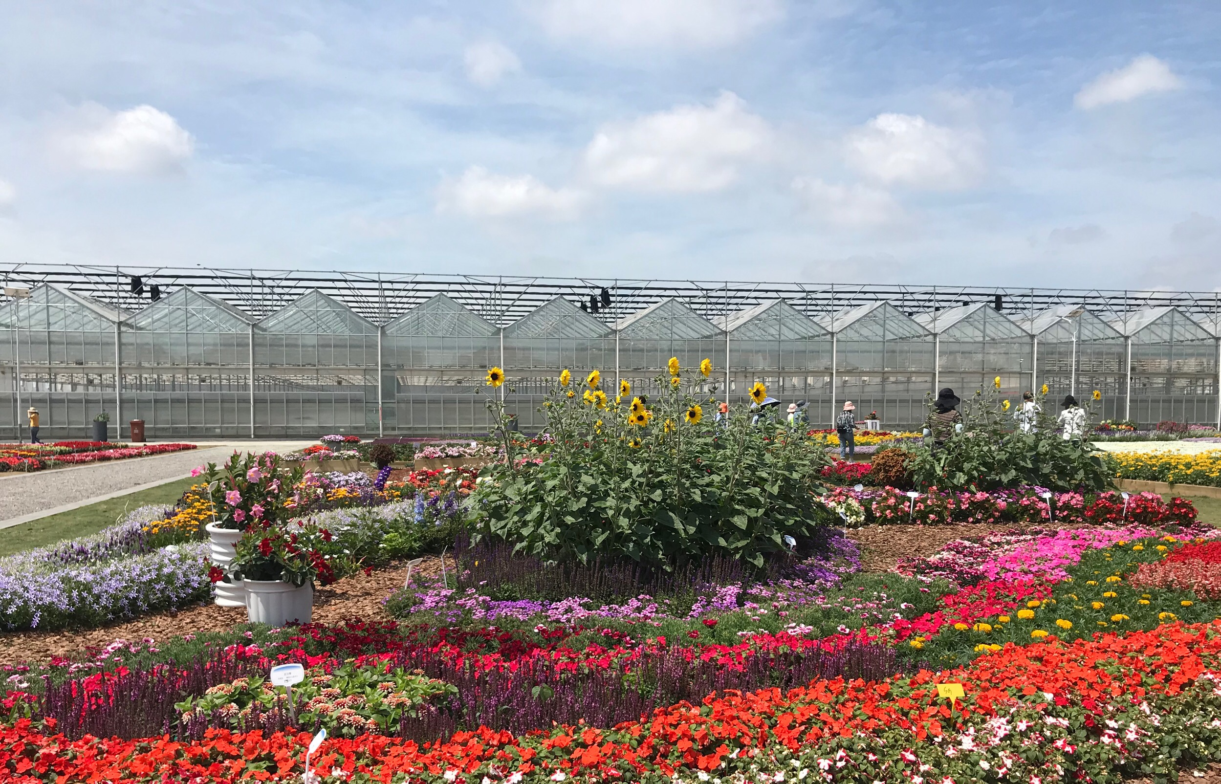 Flower Garden of Yuanyi showing Syngenta varieties