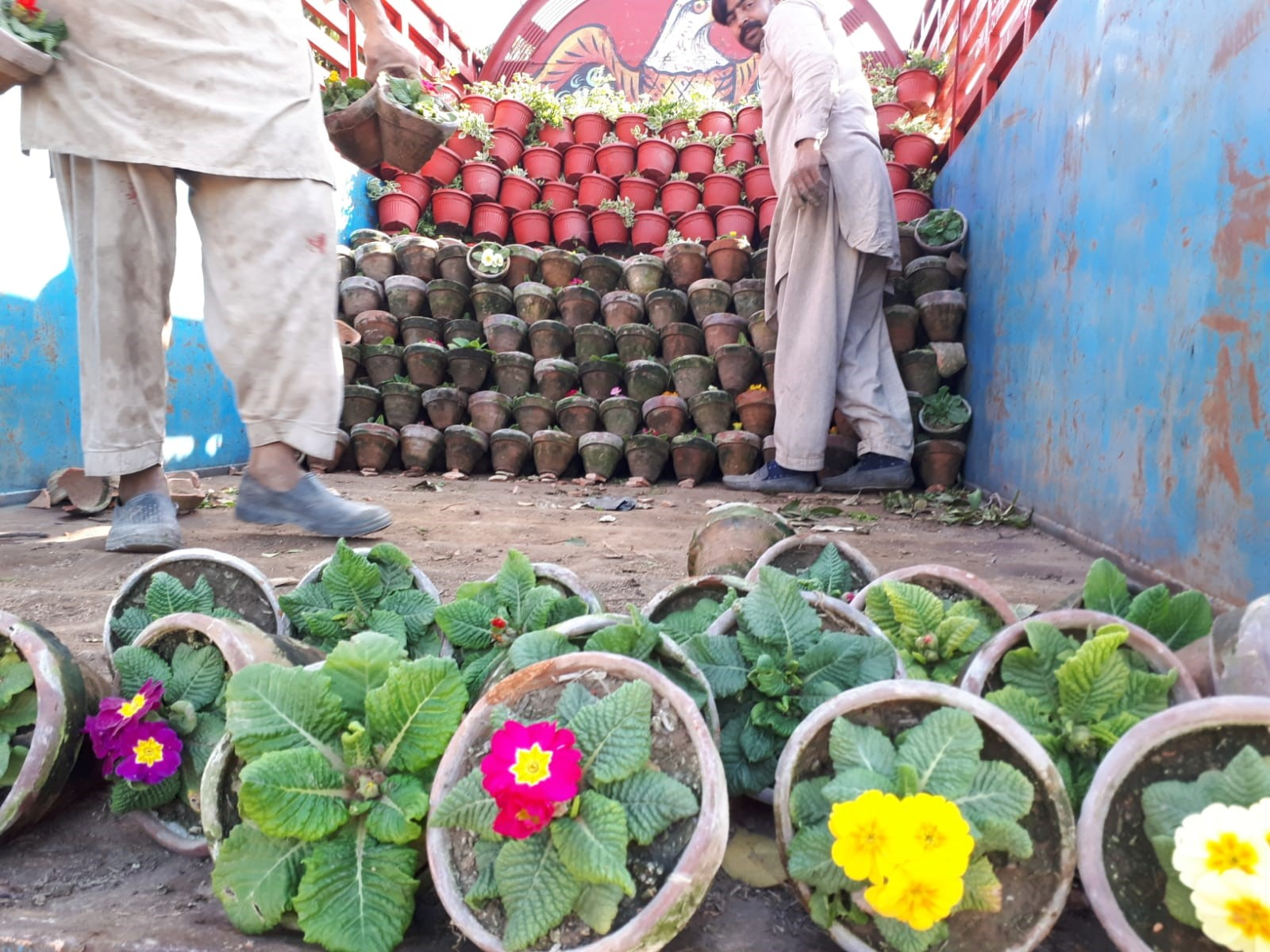 Transportation of potted flowers in India