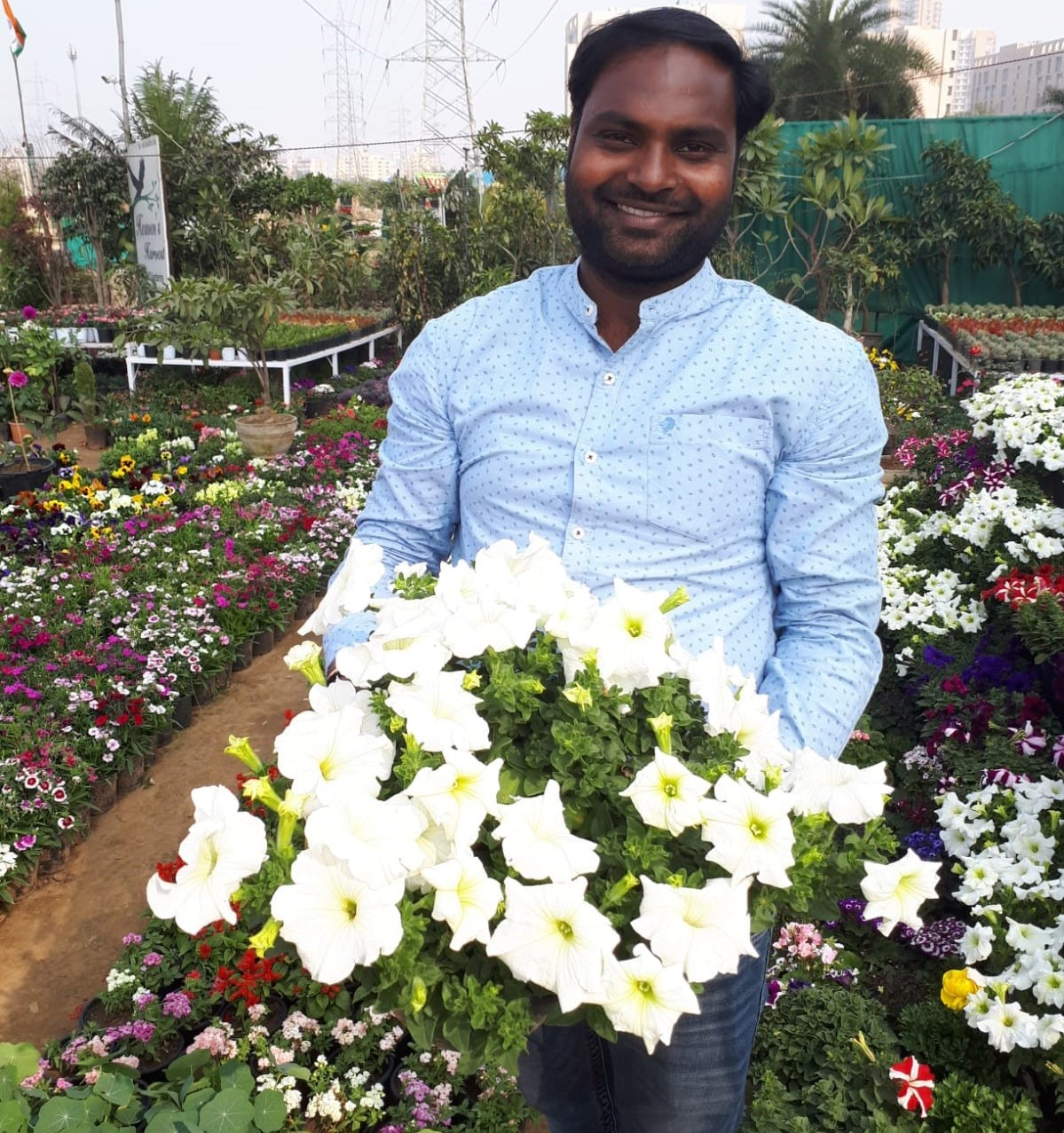 Indian farmer with Petunia Milliflora White Picobella