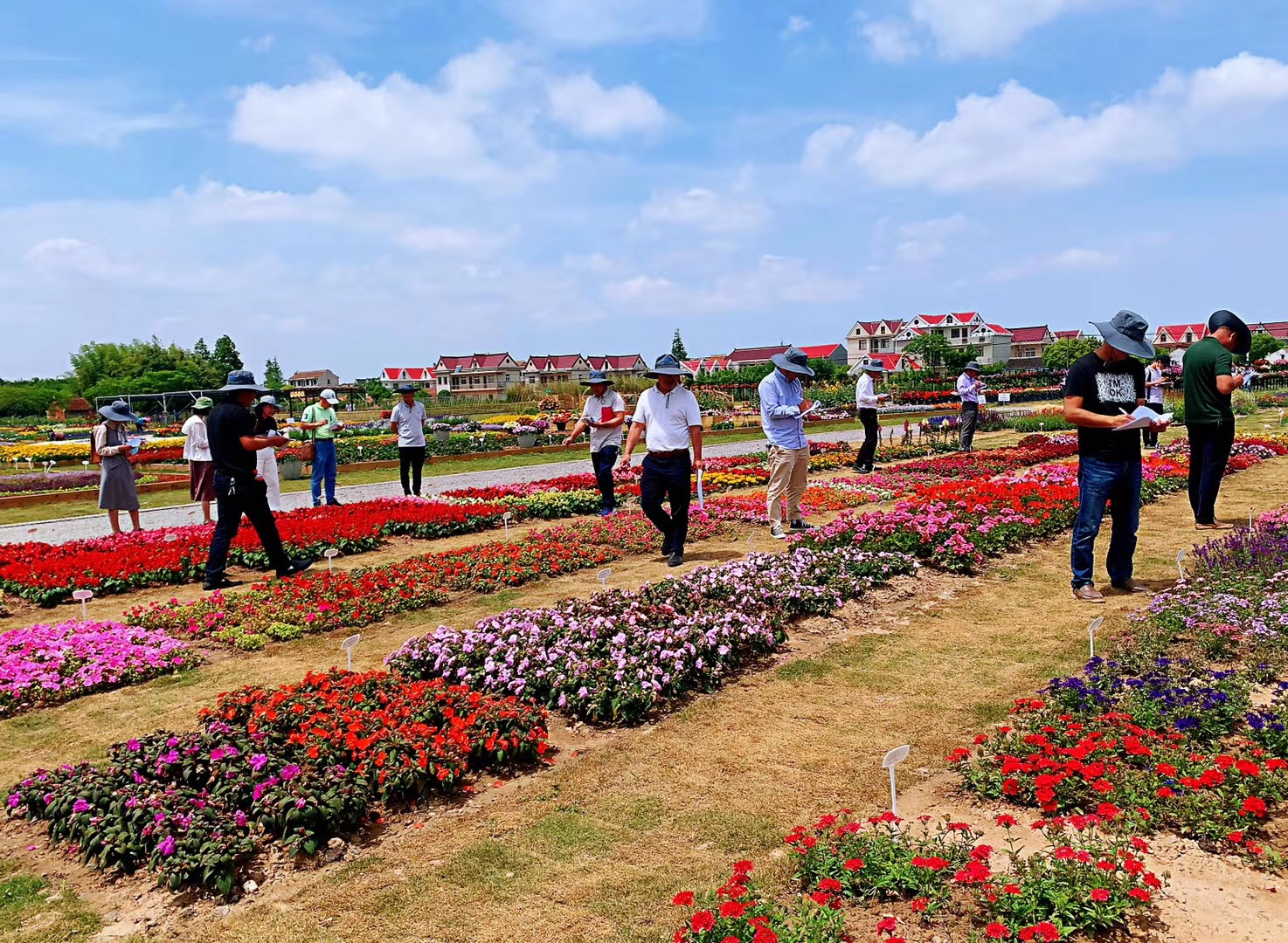 Yuanyi product presentation Syngenta Flowers