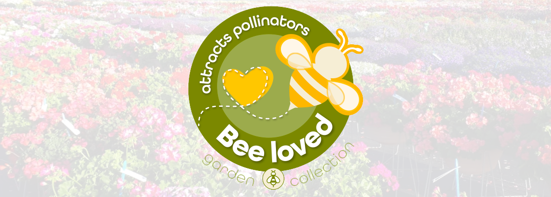 Bee Loved - Pollinator Friendly Assortment
