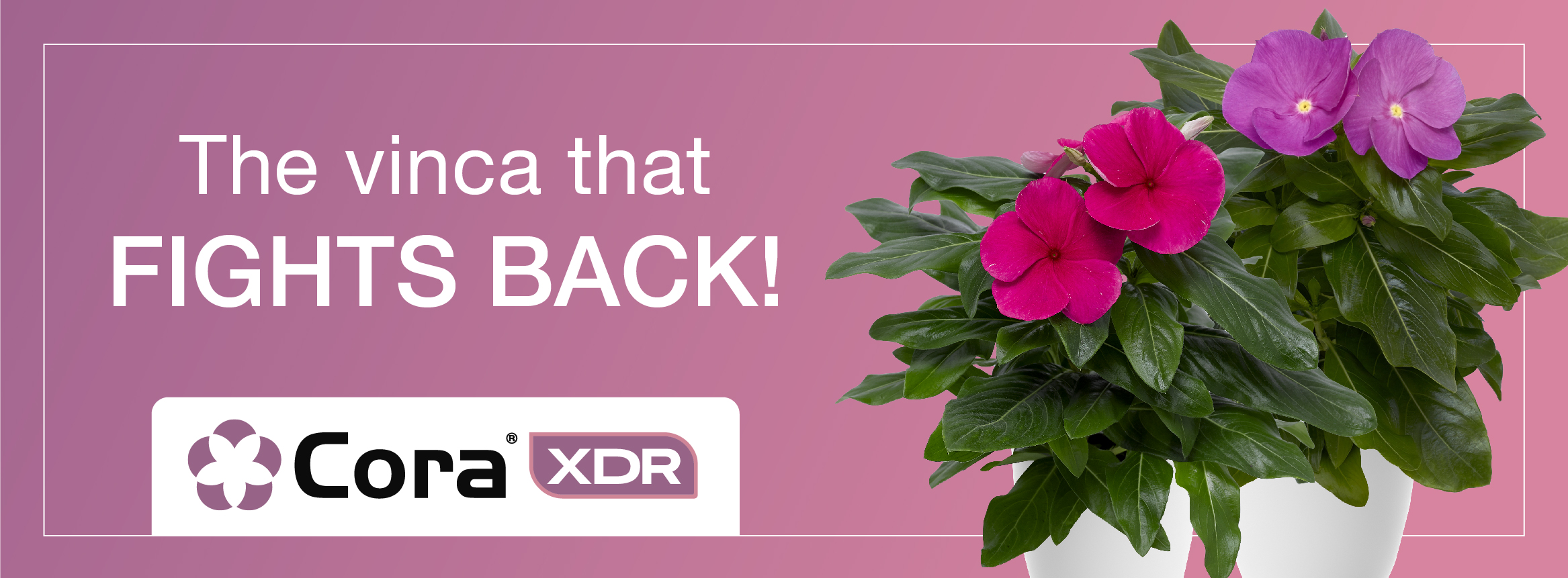 The Vinca that fights back - Cora XDR
