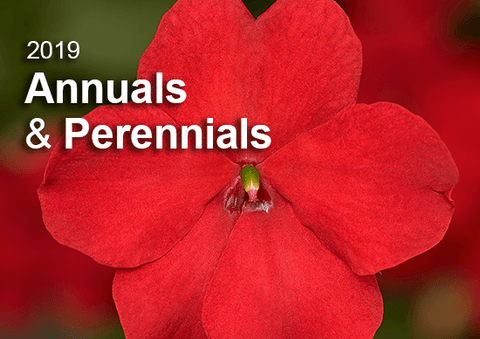 Annuals & Perennials Catalogue 2019