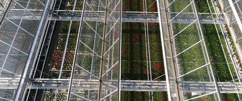 Greenhouse of Syngenta Flowers