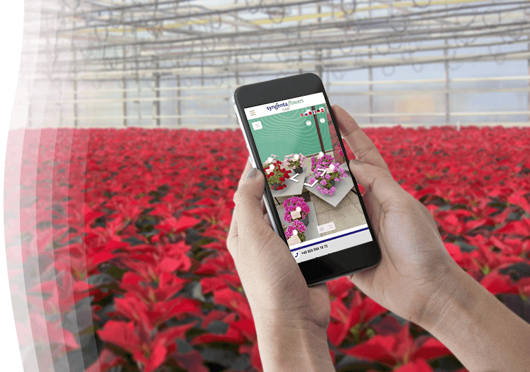 Woman in Greenhouse Watching Virtual Tour in Front of Poinsettias