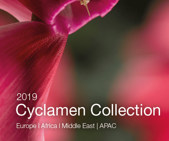 Syngenta Flowers Business International - Cyclamen - Catalogue 2019