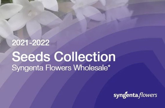 New Collection Syngenta Flowers Wholesale 2020