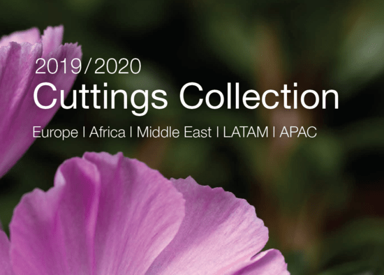 Syngenta Flowers Business International - Cuttings Collection - Catalogue 2019