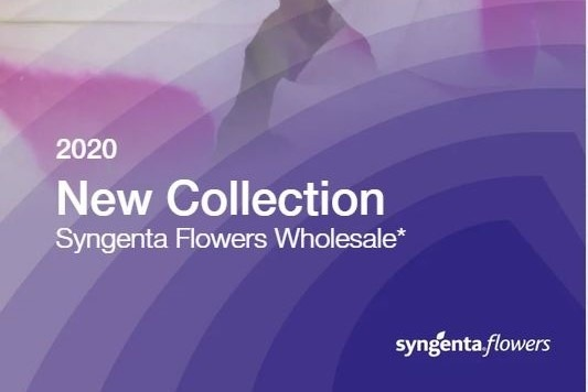 Syngenta Flowers New Collection 2020
