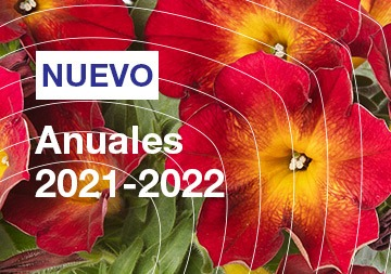 Anuales 2021-2022