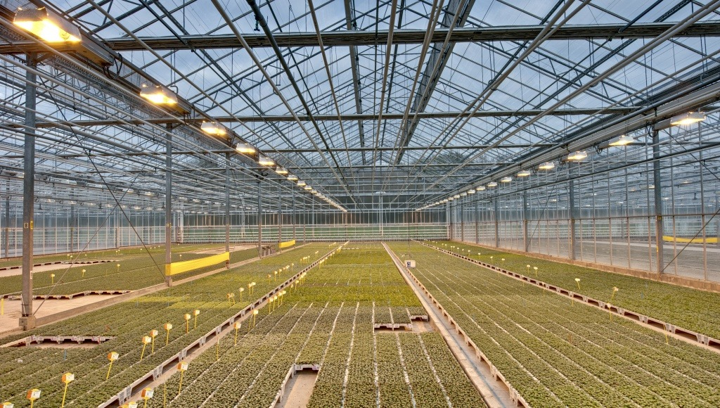Winter greenhouse care